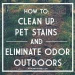 How to clean up pet stains and eliminate odor outdoors