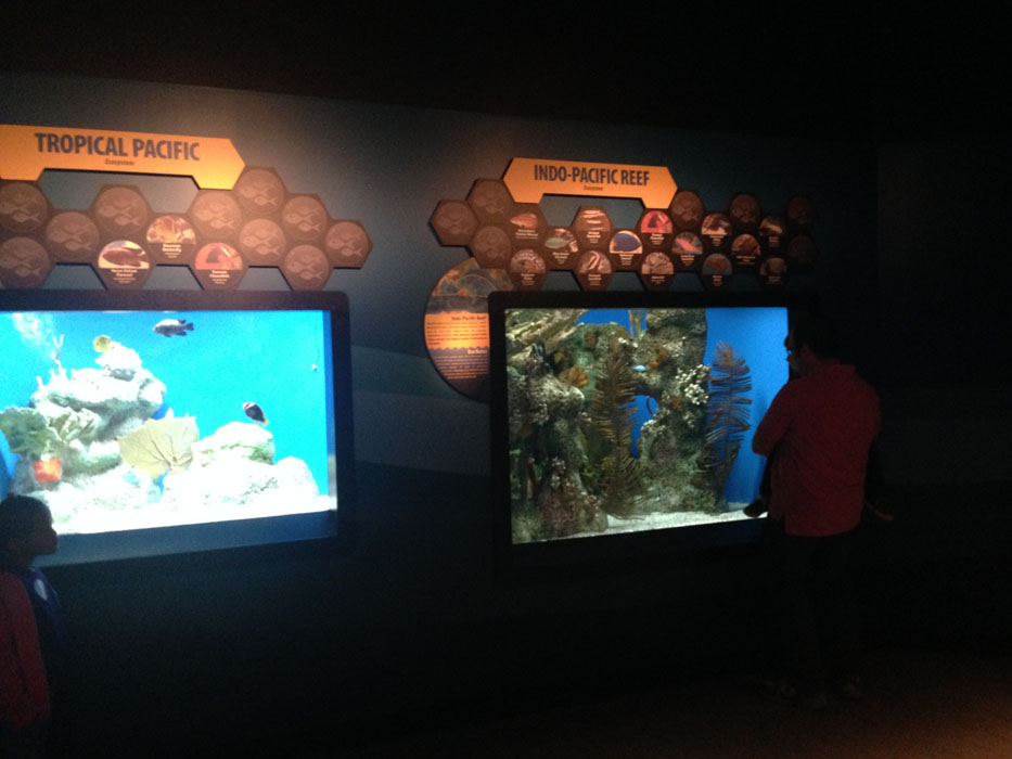 Visit the McWane Science Center - Birmingham, AL - Fish tanks