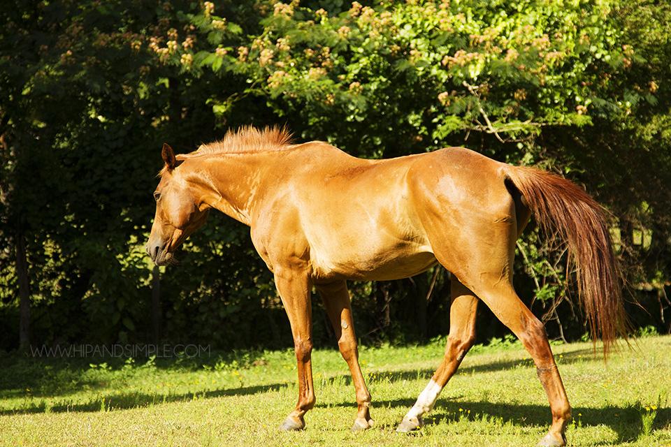 Farm Horse Pictures - Trussville, AL - 02