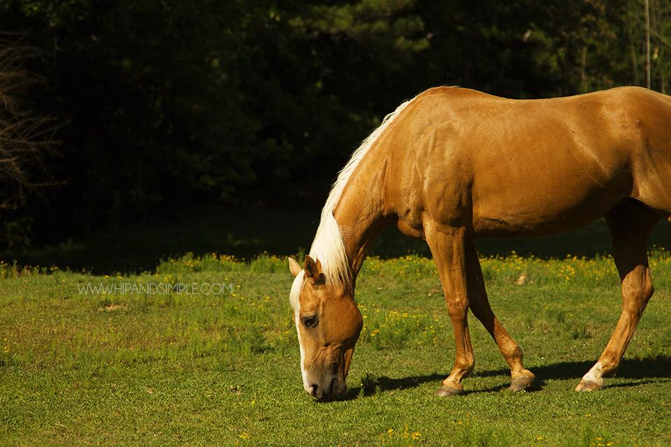 Farm Horse Pictures - Trussville, AL - 03