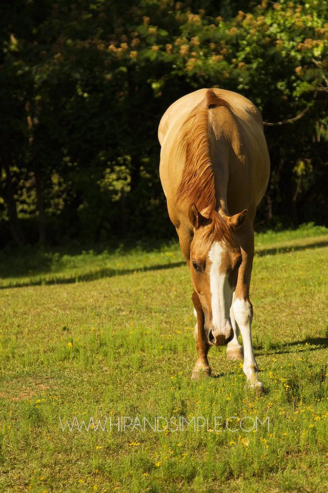Farm Horse Pictures - Trussville, AL - 05