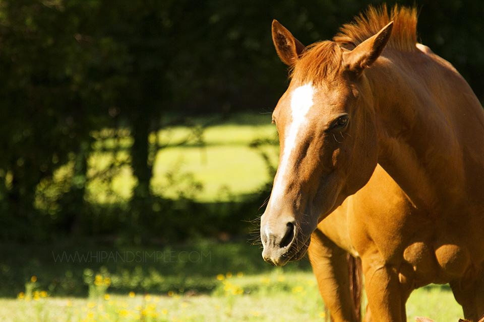 Farm Horse Pictures - Trussville, AL - 09