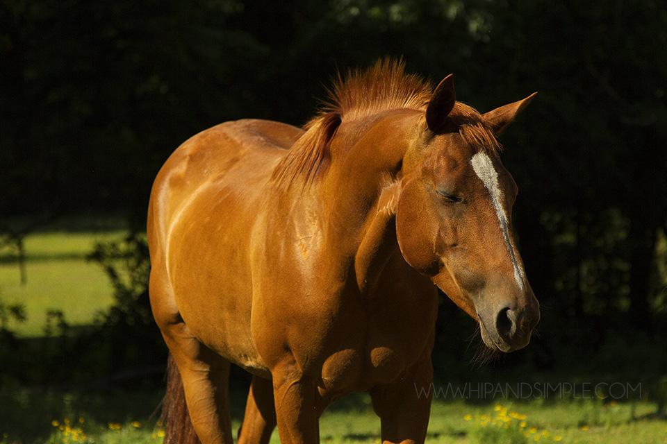 Farm Horse Pictures - Trussville, AL - 12