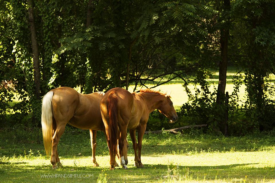 Farm Horse Pictures - Trussville, AL